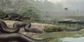 La serpiente más grande del mundo pesaba más de una tonelada