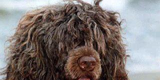 Los Obama eligen por fin a su mascota: un perro de aguas portugués