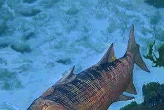 Encuentran el eslabón perdido entre peces y mamíferos