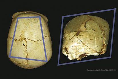 El hombre de Atapuerca también miraba musarañas... pero gigantes