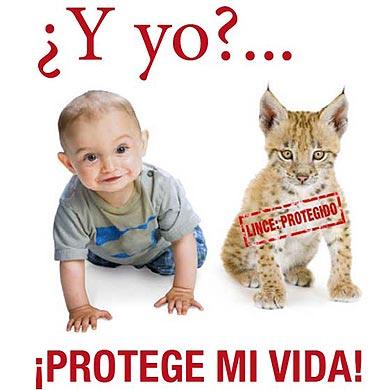Los obispos creen que en España se protege más a los linces que a los bebés