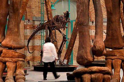 El mayor herbívoro del planeta, el Argentinosaurus, resucita en Alemania