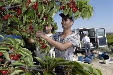 Más de 4.000 extranjeros han pedido el abono anticipado del subsidio de desempleo para regresar