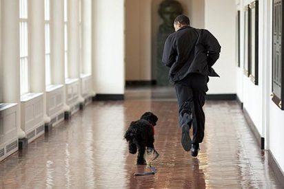 La llegada de Bo, el perro de la Casa Blanca, acapara la atención en EEUU