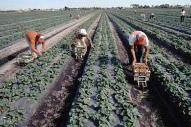 El Subdelegado dice que no se puede aspirar a trabajar en Huelva sin papeles