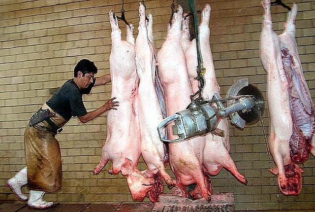 La cepa de la nueva gripe circuló años entre los cerdos sin ser detectada