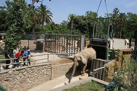 La elefanta Susi ya tiene una amiga