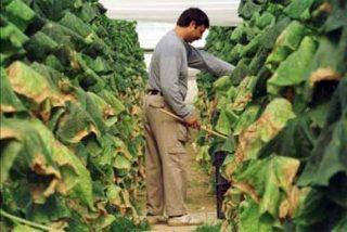Mano de obra del campo sigue siendo mayoritariamente inmigrante, pese crisis