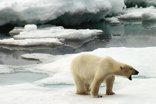 Groenlandia se derrite, víctima del calentamiento del planeta