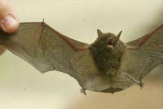 Siete niños mueren de rabia tras ser mordidos por murciélagos