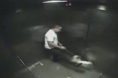 Las cámaras graban un brutal maltrato a un perro