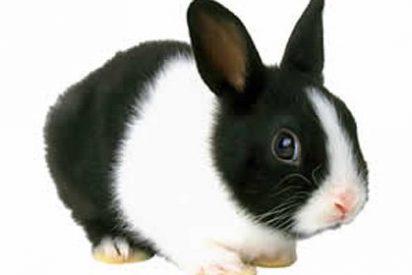 """""""Compré un conejo enano recién nacido y ahora es más grande que un gato"""""""