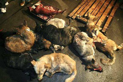 Ahora dicen los chinos que comerse a los perros con salsa de soja es peligroso