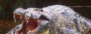 Gustavo, el cocodrilo hambriento que aterroriza Burundi