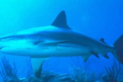 Una niña de 14 años se ceba a 'tablazos' con un tiburón que la atacaba