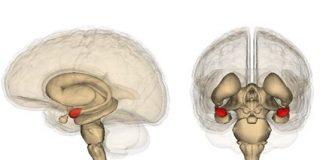 La clave de nuestro miedo a perder dinero está en la amígdala