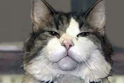 Óscar, el gato que predice la muerte, tendrá su libro