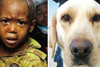 Turco: un perro abandonado que ha salvado 18 vidas en Haití