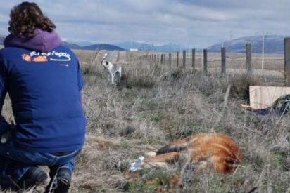 La perra Dulcinea vela el cadáver de otro perro que murió atropellado
