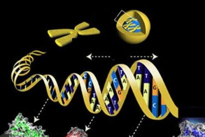 Nuevo gen de riesgo para el alzheimer de inicio tardío