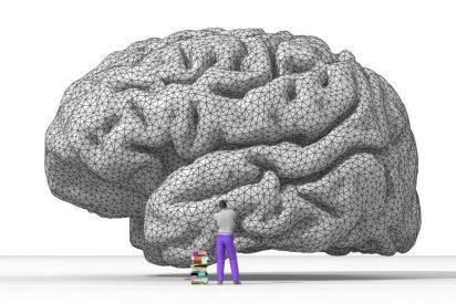 Hallan la función cerebral de dos genes relacionados con la esquizofrenia