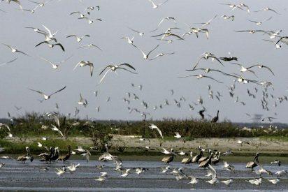 EEUU se prepara para la llegada de la mancha de crudo a la costa