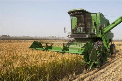 """""""El crecimiento de la agricultura en A.Latina no ha reducido la pobreza rural"""", según la FAO"""