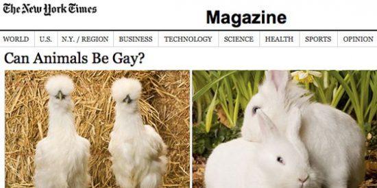 ¿Pueden ser gays los animales?