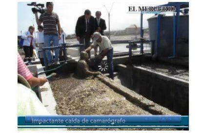 Un cámara chileno cae dentro de una fosa repleta de excrementos