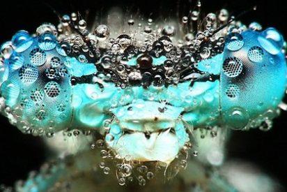 No son criaturas de otro planeta, son insectos cubiertos de gotas de rocío