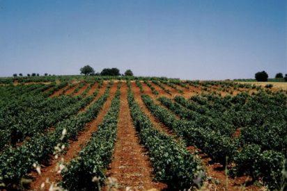 La D.O. La Mancha bate su record con 134 millones de litros de vino