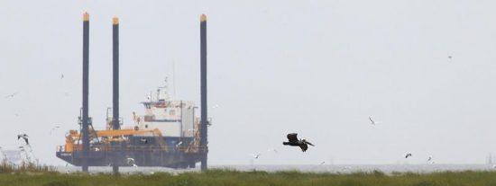 """BP considera """"un paso en falso"""" su intento legal de impedir que pescadores de Alabama le denuncien por el vertido"""