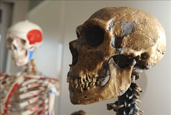 Los seres humanos modernos pudieron cruzarse con neandertales, según un estudio