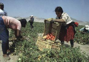 El sector agrícola en América Latina tendrá un fuerte crecimiento