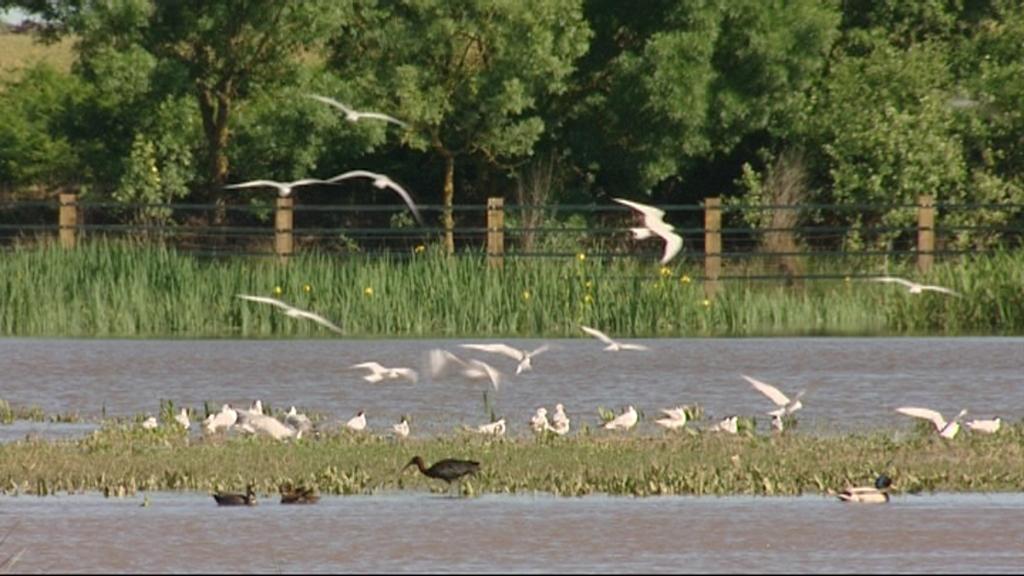 La Junta aprueba el II Plan de Desarrollo Sostenible de Doñana
