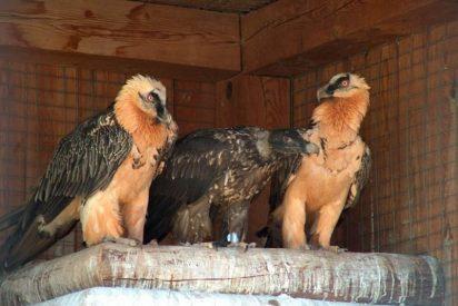 SEO/Birdlife realizará seguimiento de aves en España hasta 2012