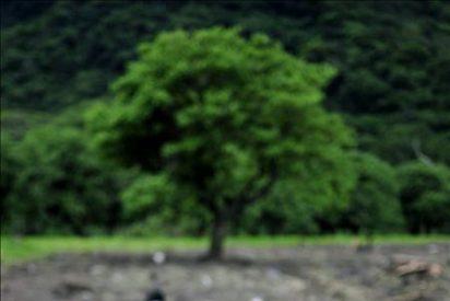"""En dos días """"Agatha"""" le cambia el rostro a Guatemala"""