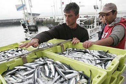 Prohibida la pesca de la anchoa en el Golfo de Vizcaya