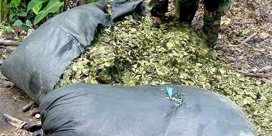 Perú niega que sea el mayor productor de coca en el mundo