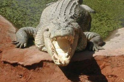 El australiano que se sentó en un cocodrilo
