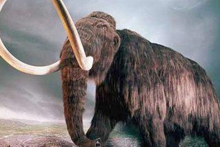El huracán desentierra los restos de un mamut de hace 15.000 años
