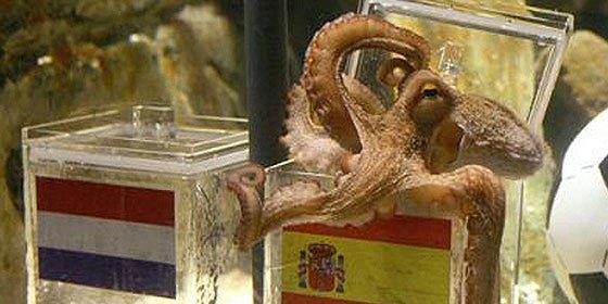 El Pulpo Paul tampoco falla en su predicción de la final y España se hace con la victoria