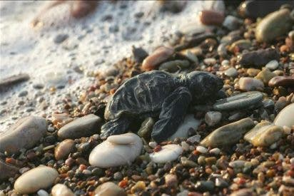 La biodiversidad del mar Mediterráneo es la más amenazada del planeta