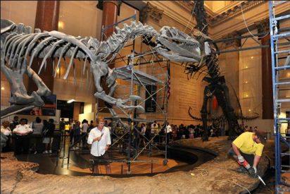 Separan dos dinosaurios para que los visitantes puedan caminar entre ellos