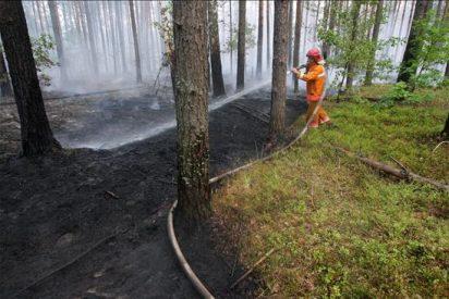 Disminuye la superficie de bosques afectada por los incendios en Rusia