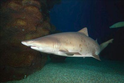 Un surfero muere al ser atacado por un tiburón en una playa de Australia
