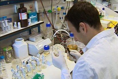 Un juez paraliza la financiación pública de la investigación con células madre en EE.UU.