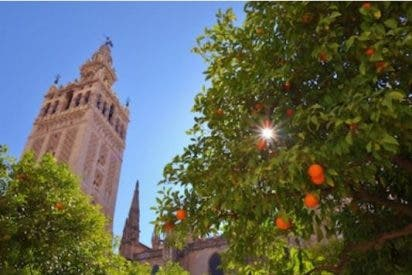 Andalucía lanza dos nuevas líneas de ayuda para reactivar el sector tras la crisis del Covid-19