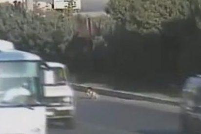 Un niño sobrevive en mitad de una autopista de Turquía