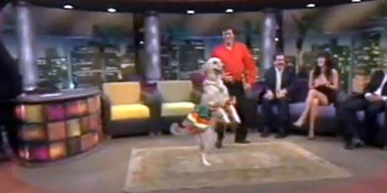 """Conozca al perro que baila """"merengue"""""""